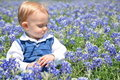 Boy Sitting in Flowers Stock Image