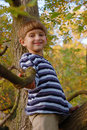 Boy sitting on the tree Stock Photography