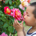 Boy smell flower Stock Image