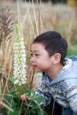 A boy smell the lupine flower asia stopping to white color at lake tekapo south island new zealand Royalty Free Stock Photography