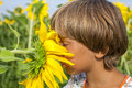 Boy sniffing sunflower in summer colorful garden Royalty Free Stock Photos