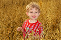 A boy standing in a field of Oats Royalty Free Stock Images