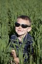 Boy with sunglasses in tall oat field Stock Image