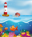 A boy swimming with fishes and corals at the beach illustration of Stock Image