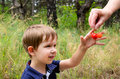 Boy takes cherries european years old smiles and from hands on a background of grass Stock Photography