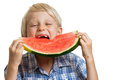 Boy taking big bite of water melon a young juicy slice watermelon isolated on white Royalty Free Stock Photo
