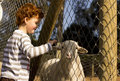 Boy touching sheep through fence Royalty Free Stock Photography