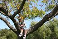 Boy in tree Stock Photos