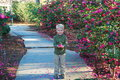 Boy walk way surrounded pink flowers holding pink petals Royalty Free Stock Photography