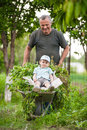 Boy in a wheelbarrow grandfather taking kid for walk on country lane Royalty Free Stock Photo