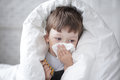 Boy wipes his nose with a tissue Royalty Free Stock Photo