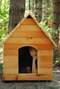 Boy in wooden house Royalty Free Stock Photo