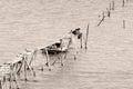 Boys fishing in Caspian Sea on broken pier Royalty Free Stock Photo