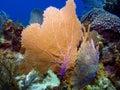 Braccaymanen luftar havet Arkivfoton