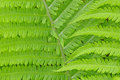 Bracken Royalty Free Stock Photography