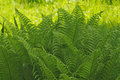 Bracken Royalty Free Stock Images