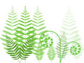 Bracken Stock Photography