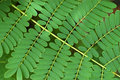 Bracken background abstract texture of small leaves Royalty Free Stock Photos