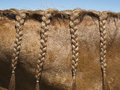 Braided horse mane Royalty Free Stock Photography