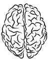 Brain contours Royalty Free Stock Photo