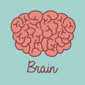 Brain design over blue background vector illustration Stock Images