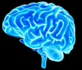 Brain detail an illustration of a human Royalty Free Stock Photo