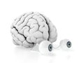 Brain with eyes Royalty Free Stock Photo