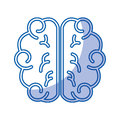 Brain human isolated icon