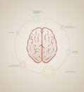 Brain infographic template vector inforaphic elements are layered separately in vector file Stock Photos