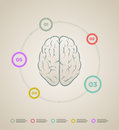 Brain infographic template vector inforaphic elements are layered separately in vector file Stock Images