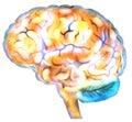 Brain neuron synapses Royalty Free Stock Photo