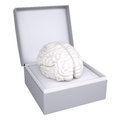 Brain in open gift box d render isolated on white background Royalty Free Stock Photos