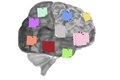 Brain with reminder notes held on thumb tacks Stock Photo