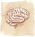 Brain sketch Stock Photos