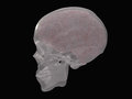 Brain and skull revealed in transparent Stock Photography