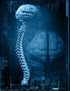 Brain and spine Royalty Free Stock Images