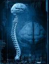 Cerebro y espina