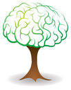 Brain tree a illustration with a information or knowledge concept Stock Photography