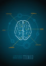 Brain vector infographic template Stock Photos