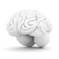 Brain on white Stock Photography
