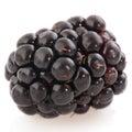 Bramble berry Royalty Free Stock Photos