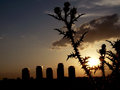 Brambles at sunset with some block of flats on background in bucharest romania Royalty Free Stock Photography