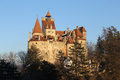 Bran castle afternoon transylvanias most famous in the beautiful light seen through fir tree branches vlad the impaler dracula Royalty Free Stock Photos