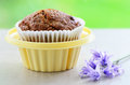 Bran muffin in cupcake holder fresh baked portable on springtime green background Royalty Free Stock Photo