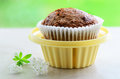 Bran muffin in cupcake holder fresh baked portable on springtime green background Stock Images