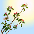 Branch apple tree with flowers illustration in vector format Stock Photos