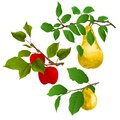 Branch apple tree with red apples and branch of pears with yellow ripe pear on white background watercolor vitage vector illustrat