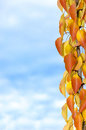 Branch of autumn colors Stock Photography