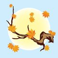 Branch of the autumn tree a with falling yellow leaves in sun Stock Image