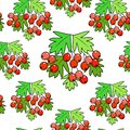 A branch of a beautiful hawthorn berry, a medicinal plant. Beneficial to health. Silent pattern. Vector illustration